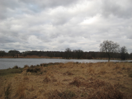 richmondparklake.jpg